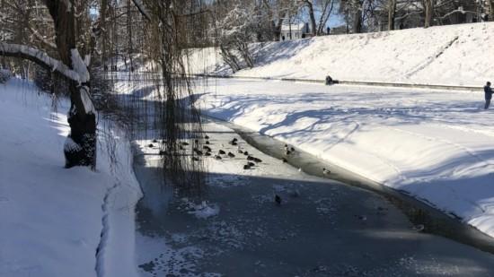 Enten Wallanlage mit Schnee