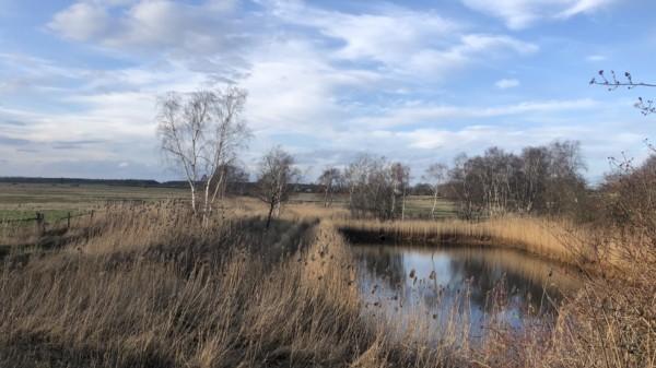 Feld Greifswald